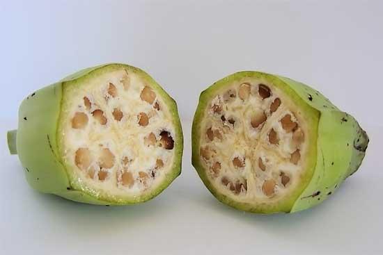 Плоды селекции или о том, как фрукты и овощи выглядели до знакомства с человеком [фото] - древний банан
