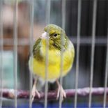 Chrome Canary для Android: что можно сказать сейчас
