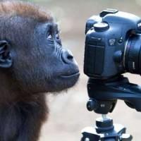 самый дорогой объектив для фотокамеры: ТОП 10