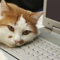 Какие неисправности чаще всего возникают в ноутбуках