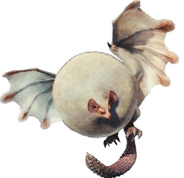 Monster Hunter World - монстры - Паолуму - прохождение