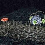 Из молекул ДНК сконструировали шагающего биоробота