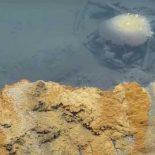 Cмертельное «Джакузи отчаяния» на дне Мексиканского залива [видео]