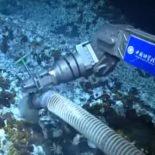 Китайские исследователи подняли со дна Тихого океана тысячелетний коралл