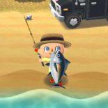 Animal Crossing: Pocket Camp – немного инфы для начинающих