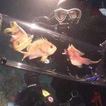 Ученые изобрели камеру для подъема глубоководных рыб [видео]