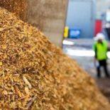 Разработкой новых типов биотоплива занялись гиганты японской промышленности