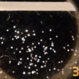 На МКС «напечатали» бактерии кишечной палочки [видео]