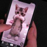 Сколько просмотров ролика в Тик Ток: как посмотреть со смартфона