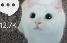 TikTok сделал Минфину США свое предложение — CNBC
