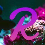 Reef: как обозначается, где купить и сколько стоит