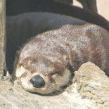 Otter Browser: без спешки, но релиз обещают уже в этом году