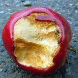 «Аморальная» оптимизация: Apple сэкономила на налога х $94 млрд